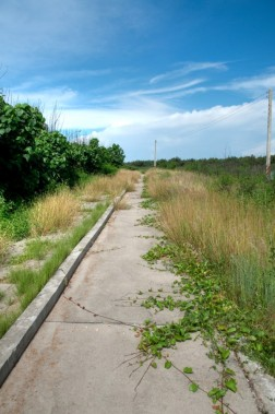 Overgrown pathways at Aimen Beach